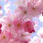 Cursul de ințiere Qitaky-Qigong! O nouă primăvară în viața ta.