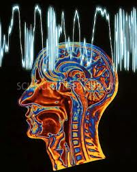 Creier perceptii