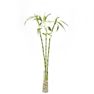 3-spiral-bamboo-with-vase